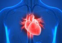 užburtas hipertenzijos ratas)