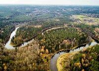 Didžiulis sandoris – parduota 4,3 tūkst. hektarų miško