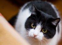 Katę vaikų akivaizdoje mušęs vyras atsipirko 50 eurų bauda, o gyvūnai nebuvo konfiskuoti