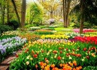 Atrodo tiesiog nuostabiai: viename gražiausių Europos parkų pražydo tūkstančiai tulpių