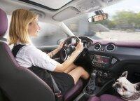 To nežino daugelis vairuotojų: kodėl automobilyje privaloma gyvūnus prisegti saugos diržais