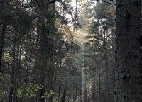 Privačių miškų savininkai prakalbo apie mitingus ir kompensacijas