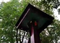 Ant bitininko kapo įsikūrė bičių spiečius