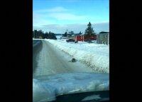 Prie krantų įstrigę ruoniai blokuoja kelius