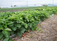 Ūkis, kurios šeimininkams derliaus nereikia vežti iš namų