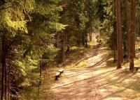 Pažintis su atgimstančiu Lietuvos kurortu: romantiškas gamtos kampelis, kuriame galima ir pailsėti, ir sveikatą sustiprinti