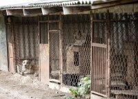 Du mėnesiai po daugyklų demaskavimo: prieglaudos perpildytos, bet atiduoti gyvūnų – nevalia