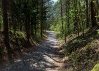 Bijote pasiklysti miške? Miškininkai pataria, kaip orientuotis