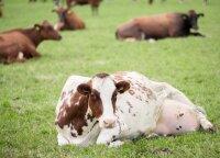 Ūkio kūrimo sunkumai negąsdina – karves jau melžė būdamas keturiolikmetis