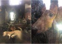 Kraupiomis sąlygomis šunis laikė užrakintame name: išgelbėti gyvūnai atgavo jėgas, tačiau liko vieniši