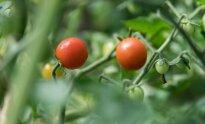 Gamtinė žemdirbystė
