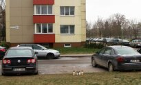 Vaikino nužudymo vieta Panevėžyje