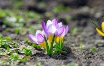 Astrologės Lolitos prognozė kovo 17 d.: metas atsirinkti, kas yra kas