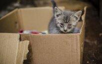 Gyvūnų globėjai kraupsta: gyvūnai vadomis paliekami tiesiog prie konteinerių!