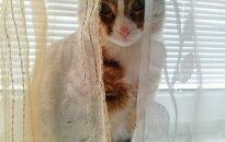 Ieškomi namai savarankiškai katytei Tairai