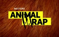 Vaizdo įrašuose – gyvūnai ir žmonės padeda vieni kitiems