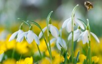 Astrologės Lolitos prognozė kovo 11 d.: švęskime