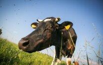 Lietuvos pieno gamintojams – 13,3 mln. ES parama