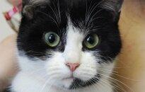 Katė Zujė iš Zujūnų ieško šeimininko