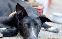 Darbų įkarštis gyvūnų prieglaudoje: prašome palaikymo!