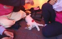 Neišskiriami: kartu su pabėgėliais keliaujančios katės istorija