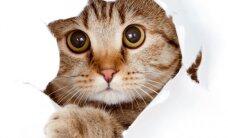 Dalailamos katė papasakos, kaip rasti laimę ir gyvenimo prasmę. Laimėtojai