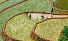 Laosas – laukinė kryptis neįprastų kelionių gurmanams