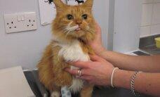 Išaiškintas veterinarijos gydytojas, gyvūnus gydęs neregistruotais vaistais