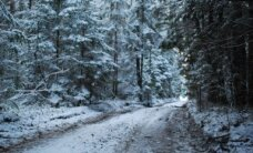 Įžūlius miško kirtėjus padės tramdyti prokurorai