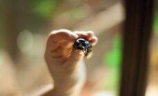 Zoologijos sode susipažinti su gyvūnais galima ir iš arčiau