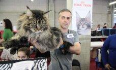 Kauną užvaldė katės: jų pažiūrėti plūsta šimtai žmonių
