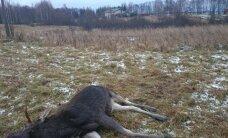 Prie žmonių namų medžiojusiems medžiotojams – rimti nemalonumai