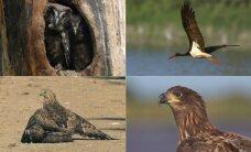 Gamtos turtas, už kurio saugojimą galite gauti pinigų