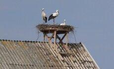 Medinės platformos buvo keliamos ant pastatų stogų