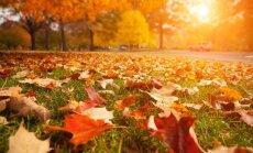 """Ką būtina nuveikti sode, darže ir gėlyne <span style=""""color: #ff0000;"""">lapkričio mėnesį</span>"""