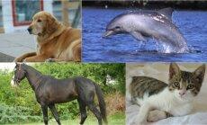 Gyvūnai, kurie žmonėms padeda pasveikti