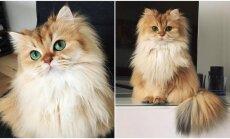 Fotogeniška katė