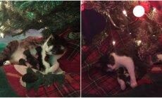 Kalėdų stebuklas