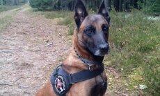 Nušauto pasieniečių šuns Ramzio brolis Nartas surado dingusį žmogų