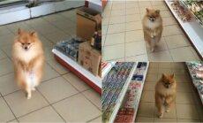 Šuo vaikšto po prekybos centrą