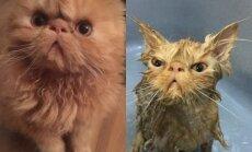 Gyvūnai prieš ir po maudynių