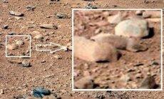 Marso žiurkė