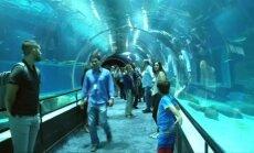 Rio de Žaneire – didžiausias akvariumas visoje Pietų Amerikoje