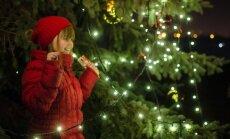 Kiekviename augale, esančiame jūsų namuose, gyvena daug įvairių gyvių, taigi, Kalėdų eglė nėra išskirtinė.