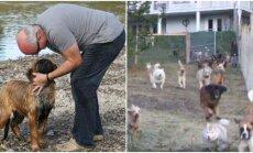 Šunų ferma