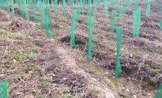 Netrukus prasidės miško sodinimo darbai