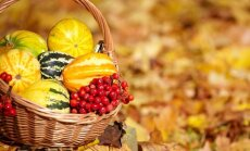 Kaip pasirūpinti sodu ir daržu rugsėjį?