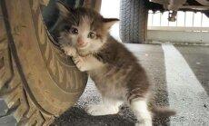 Išgelbėtas kačiukas