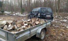 Pasiniečių tarnybinis automobilis su mediena