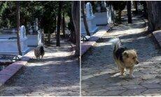 Šuo lanko savo šeimininko kapą